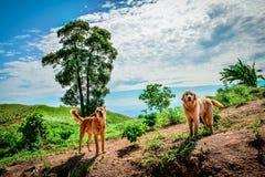 2 perros en la montaña Foto de archivo