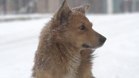 Perros en nevadas fuertes metrajes