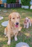 Perros en parque del perro imágenes de archivo libres de regalías