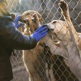 Perros en refugio Fotografía de archivo