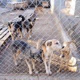 Perros en refugio Fotos de archivo libres de regalías