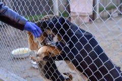 Perros en refugio Foto de archivo libre de regalías