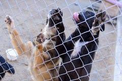 Perros en refugio Foto de archivo