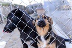 Perros en refugio Imagen de archivo libre de regalías