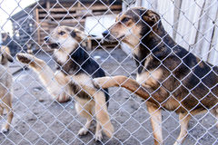 Perros en refugio Imágenes de archivo libres de regalías