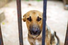 Perros en un refugio para animales que espera para ser adoptado Foco selectivo Foto de archivo