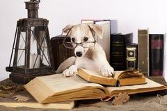 Perros en vidrios con los libros Fotos de archivo libres de regalías