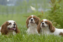 perros encantadores Foto de archivo libre de regalías