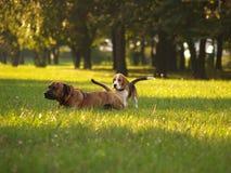 Perros/extranjeros totales, pero amigos Imágenes de archivo libres de regalías