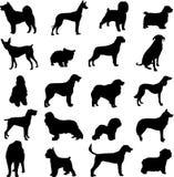 Perros famosos Imágenes de archivo libres de regalías