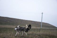 Perros felices Foto de archivo