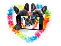 Perros felices de las tarjetas del día de San Valentín fotos de archivo