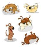 Perros felices divertidos Imágenes de archivo libres de regalías