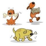 Perros felices divertidos Fotos de archivo libres de regalías