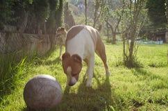 Perros felices preciosos Foto de archivo libre de regalías