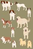 Perros fijados Foto de archivo