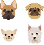 Perros fijados para la animal-tienda Imagen de archivo libre de regalías