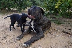 Perros grandes y pequeños Foto de archivo