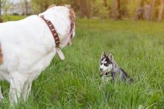 Perros grandes y pequeños Concepto de los amigos Imagen de archivo