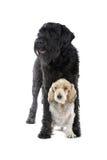 Perros grandes y pequeños lindos Foto de archivo