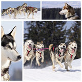 Perros juguetones en la nieve Fotografía de archivo libre de regalías