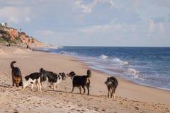 Perros juguetones en la playa Foto de archivo libre de regalías