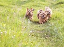 Perros lindos Fotografía de archivo libre de regalías