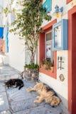 Perros lindos el dormir de Santorini Fotografía de archivo libre de regalías