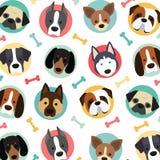 Perros lindos fijados Imagenes de archivo