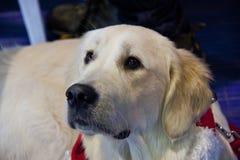 Perros lindos y hermosos Fotografía de archivo