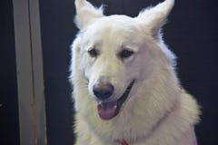 Perros lindos y hermosos Imagen de archivo libre de regalías