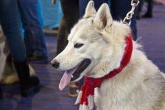 Perros lindos y hermosos Fotos de archivo libres de regalías