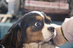 Perros lindos y hermosos Imagenes de archivo