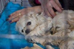 Perros lindos y hermosos Fotos de archivo
