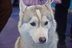 Perros lindos y hermosos Foto de archivo libre de regalías