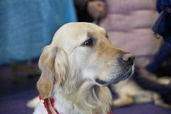 Perros lindos y hermosos Imagen de archivo
