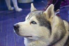 Perros lindos y hermosos Imágenes de archivo libres de regalías