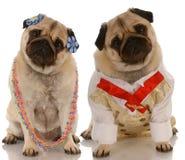 Perros masculinos y femeninos Fotos de archivo