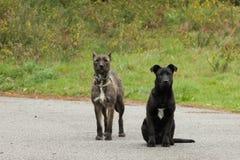 Perros negros y grises lindos fotos de archivo
