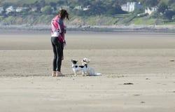Perros obedientes en la playa con la mujer Fotos de archivo