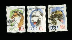 Perros pastor en sellos del poste de URSS Imágenes de archivo libres de regalías