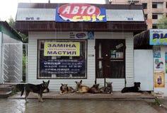Perros perdidos Foto de archivo