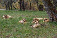 Perros perdidos Imágenes de archivo libres de regalías
