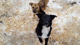 Perros perdidos en el refugio en Ucrania almacen de video