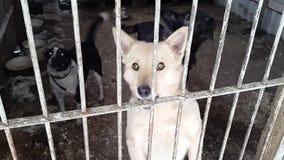 Perros perdidos en el refugio en Ucrania almacen de metraje de vídeo