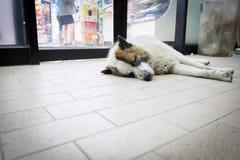 Perros perdidos que duermen en el piso Foto de archivo