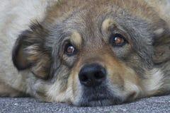 Perros perdidos que duermen en la calle Imágenes de archivo libres de regalías