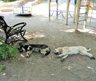 Perros perdidos que duermen en la calle imagenes de archivo
