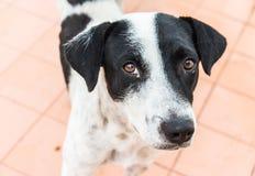 Perros perdidos que le miran Imágenes de archivo libres de regalías