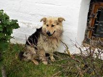 Perros perdidos urbanos foto de archivo libre de regalías